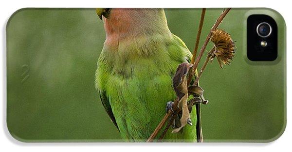 Lovely Little Lovebird  IPhone 5 / 5s Case by Saija  Lehtonen