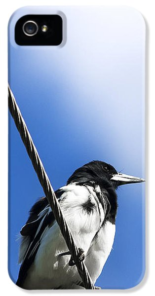 Magpie Up High IPhone 5 Case by Jorgo Photography - Wall Art Gallery
