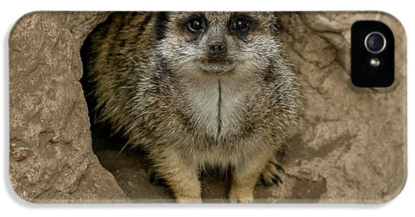 Meerkat IPhone 5 Case by Ernie Echols