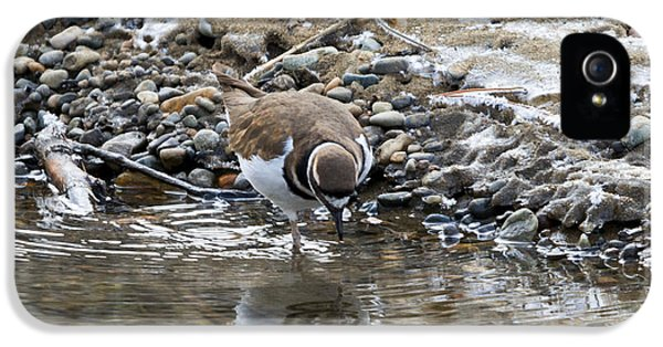 Killdeer iPhone 5 Case - Mirror Mirror by Mike Dawson