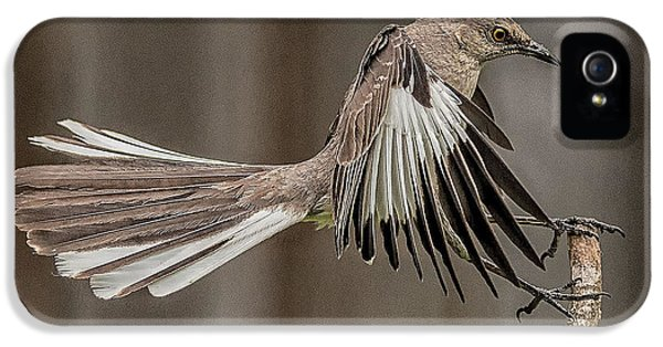 Mockingbird  IPhone 5 Case by Rick Barnard