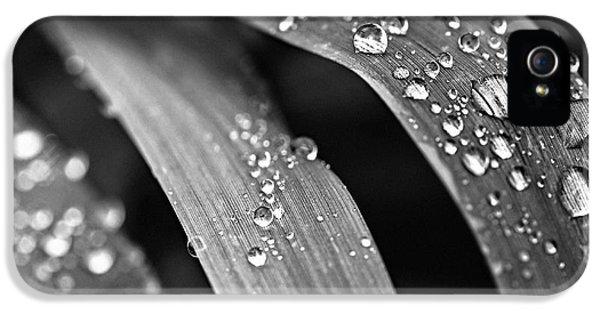Raindrops On Grass Blades IPhone 5 Case