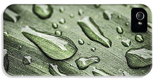 Raindrops On Leaf IPhone 5 Case by Elena Elisseeva