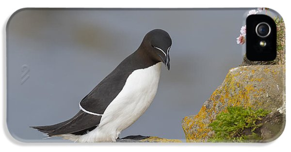 Razorbill IPhone 5 Case