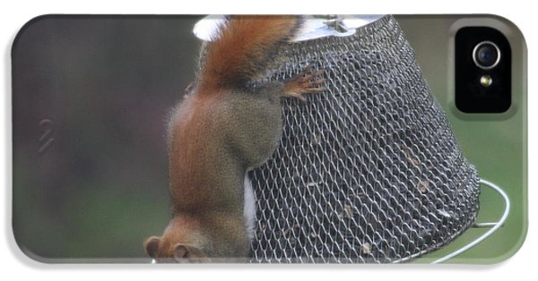 Red Squirrel On Hanging Feeder 3 IPhone 5 Case by Michael Collins