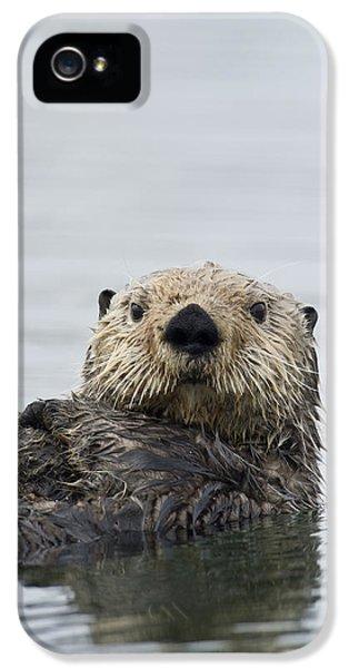 Sea Otter Alaska IPhone 5 Case