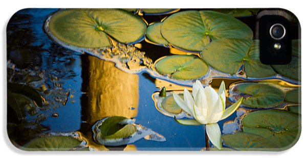 Serenity IPhone 5 Case by Sara Frank