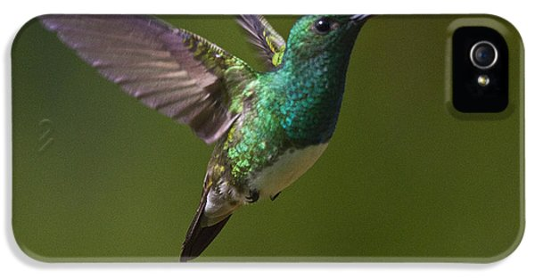 Snowy-bellied Hummingbird IPhone 5 Case by Heiko Koehrer-Wagner