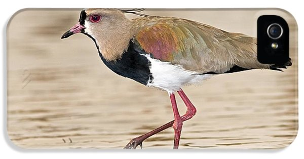 Southern Lapwing IPhone 5 Case by Tony Camacho