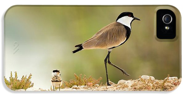 Spur-winged Lapwing Vanellus Spinosus IPhone 5 Case by Photostock-israel