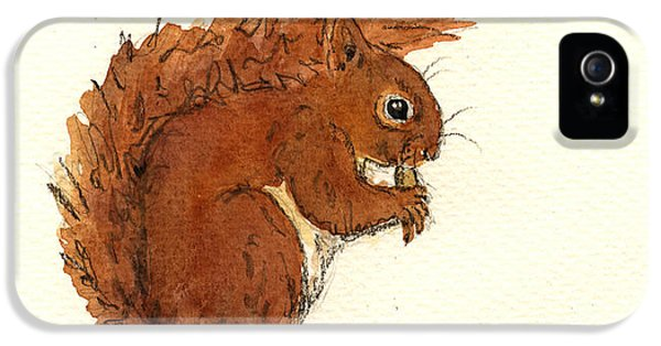 Squirrel iPhone 5 Case - Squirrel by Juan  Bosco