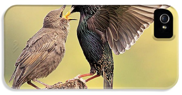 Starlings IPhone 5 Case by Grant Glendinning