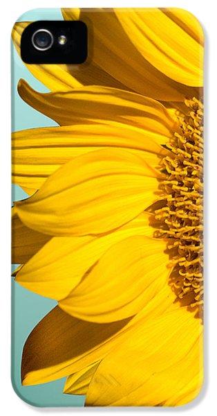 Sunflower iPhone 5 Case - Sunflower by Mark Ashkenazi