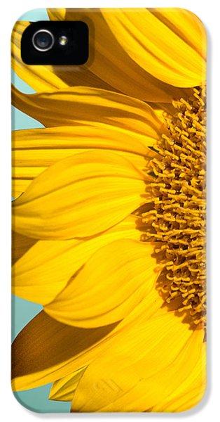 Sunflower IPhone 5 Case by Mark Ashkenazi