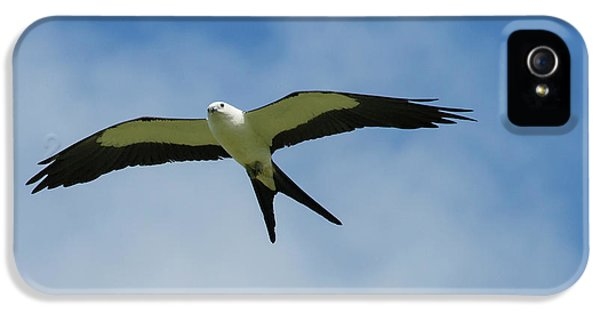 Swallow iPhone 5 Case - Swallow-tailed Kite In Flight by Maresa Pryor