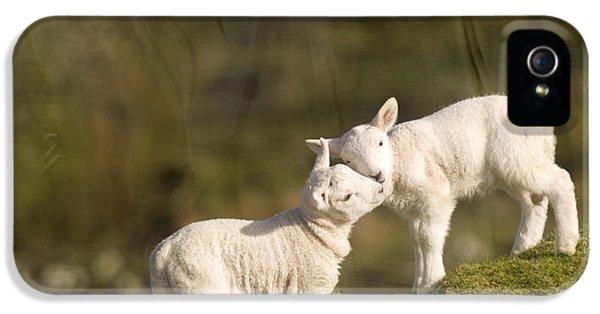 Sheep iPhone 5 Case - Sweet Little Lambs by Angel Ciesniarska