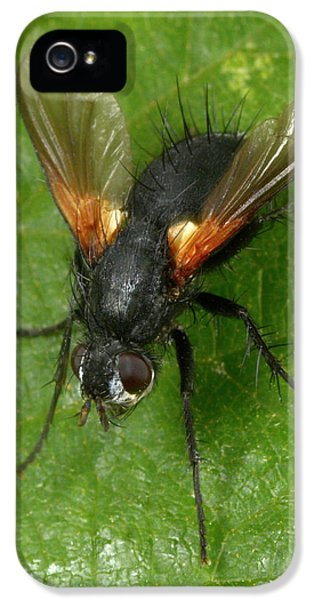 Tachinid Fly IPhone 5 Case by Nigel Downer