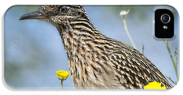 The Greater Roadrunner  IPhone 5 Case