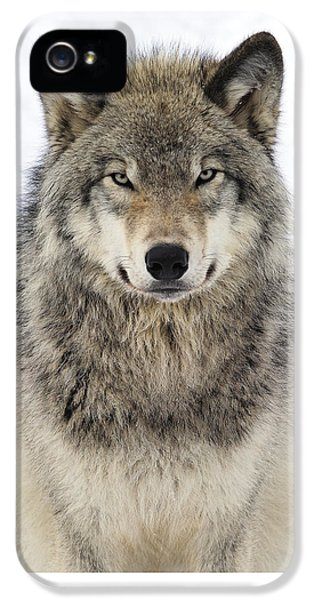 Wolves iPhone 5 Case - Timber Wolf Portrait by Tony Beck