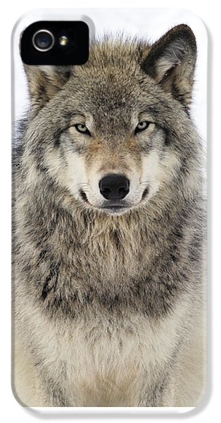 Timber Wolf Portrait IPhone 5 Case