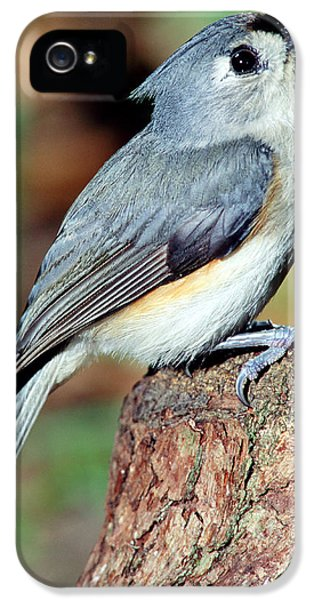 Tufted Titmouse IPhone 5 Case