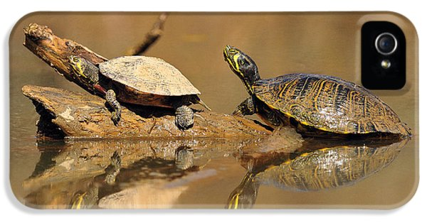Alligator Snapping Turtle iPhone 5 Cases | Fine Art America