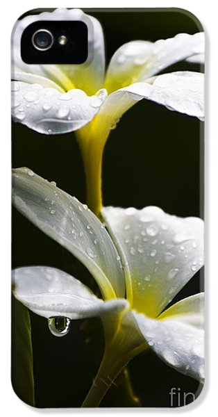 Water Droplet On Frangipani Flower IPhone 5 Case by Jorgo Photography - Wall Art Gallery