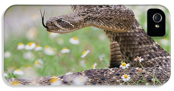 Western Diamondback Rattlesnake IPhone 5 Case by Larry Ditto