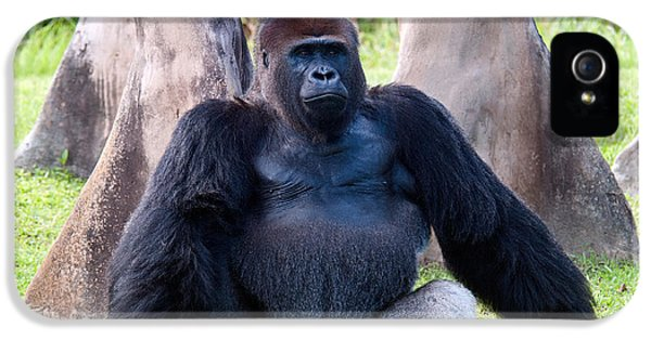 Western Lowland Gorilla IPhone 5 Case by Mark Newman