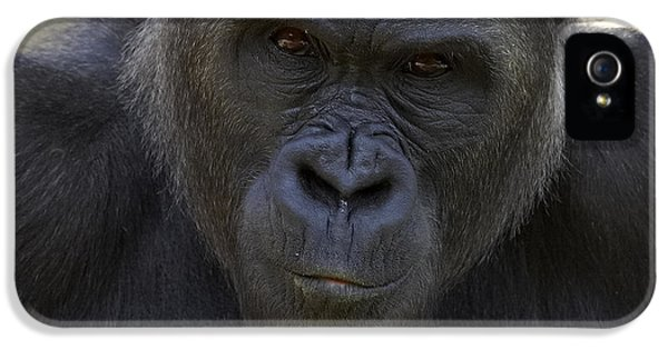 Western Lowland Gorilla Portrait IPhone 5 Case by San Diego Zoo