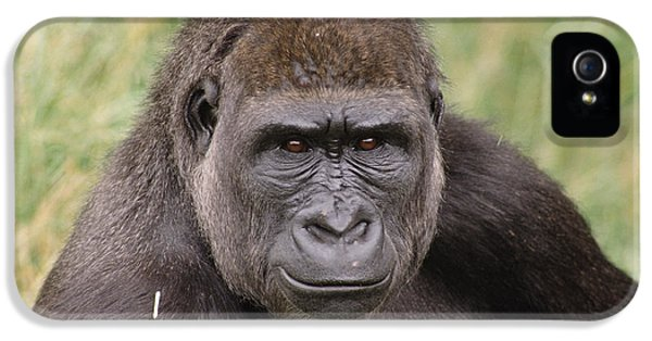 Western Lowland Gorilla Young Male IPhone 5 Case by Gerry Ellis
