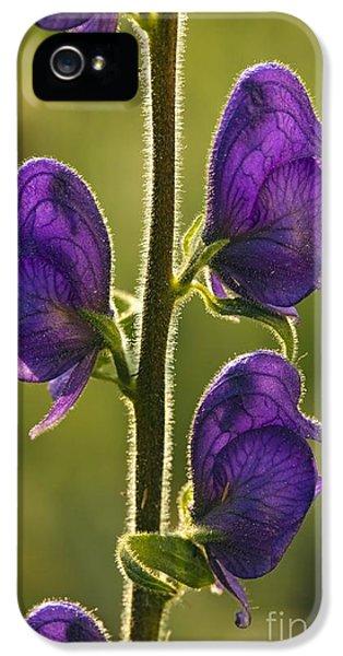 Western Monkshood Aconitum Columbianum IPhone 5 Case