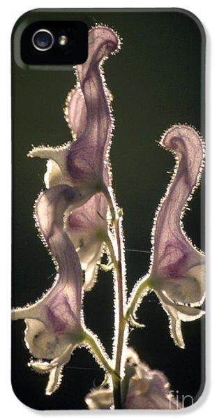 White Monkshood Flowers Aconitum Sp IPhone 5 Case