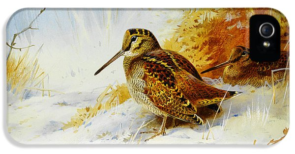 Winter Woodcock  IPhone 5 / 5s Case by Celestial Images