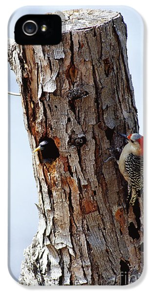 Woodpecker And Starling Fight For Nest IPhone 5 Case by Gregory G. Dimijian