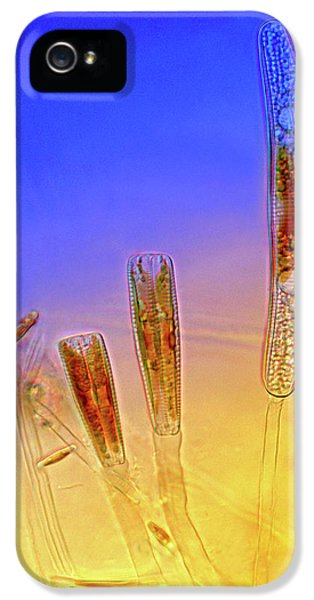 Diatoms IPhone 5 Case by Marek Mis