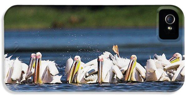Great White Pelican (pelecanus IPhone 5 Case by Martin Zwick