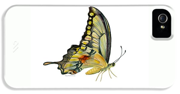 104 Perched Swallowtail Butterfly IPhone 5 Case by Amy Kirkpatrick