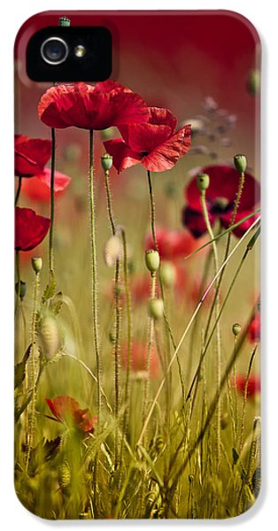 Summer Poppy IPhone 5 Case by Nailia Schwarz