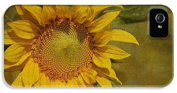 Sunflower iPhone 5 Case - Sunflower by Cindi Ressler