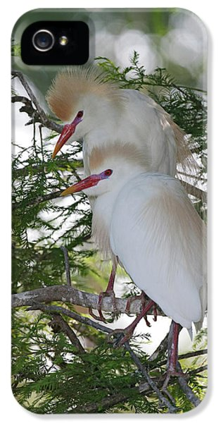 Usa, Florida, St IPhone 5 / 5s Case by Jaynes Gallery