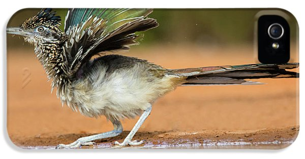 Roadrunner iPhone 5 Case - Greater Roadrunner (geococcyx by Larry Ditto