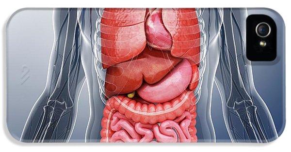 Human Internal Organs IPhone 5 Case