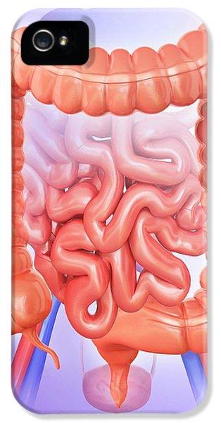 Large Intestine IPhone 5 Case