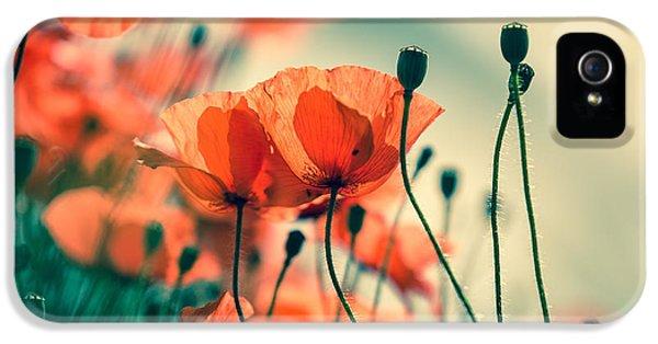 Flowers iPhone 5 Case - Poppy Meadow by Nailia Schwarz