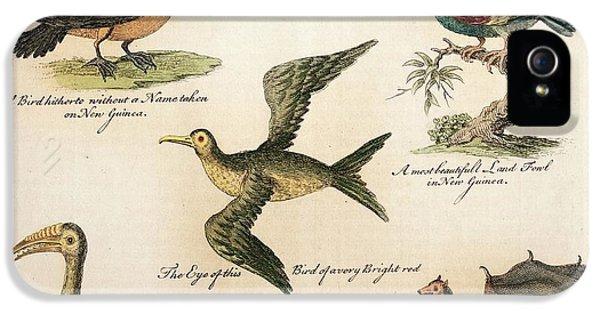 Hornbill iPhone 5 Case - 1735 William Dampier Birds Of The Pacific by Paul D Stewart