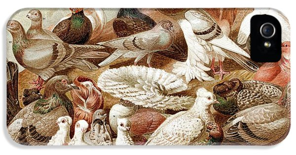 1870 Domestic Fancy Pigeon Breeds Darwin IPhone 5 / 5s Case by Paul D Stewart