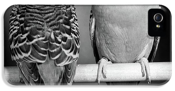 1960s Pair Of Parakeets Perched IPhone 5 Case