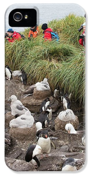 A Black Browed Albatross IPhone 5 Case by Ashley Cooper