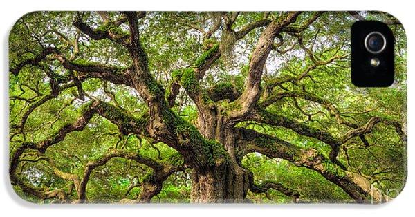 Angel Oak Tree Of Life IPhone 5 Case by Dustin K Ryan
